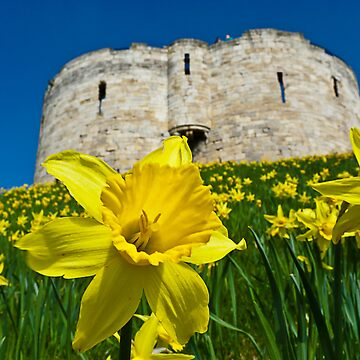 Daffodils by Clifford's Tower, York by GrahamCSmith