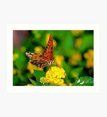 Portrait of a Butterfly Art Print