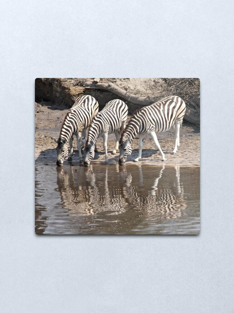 Alternate view of Three zebras Metal Print