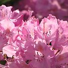 Rhododendron Gatekeepers by Maryann Harvey