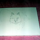 Drawing The Outline For the Cat Painting-October 2010 by Bearie23