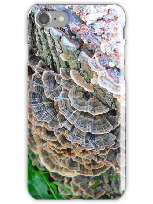 Turkey Tails by andytechie