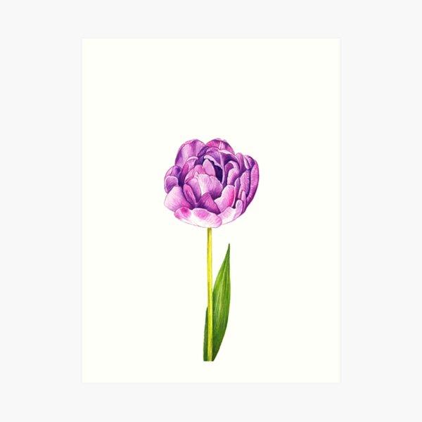 Purple Double Tulip Art Print