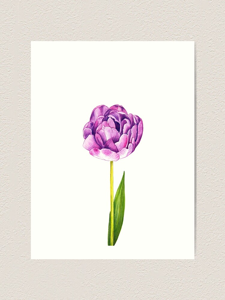 Alternate view of Purple Double Tulip Art Print