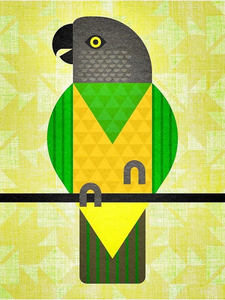 Senegal Parrot by scottpartridge