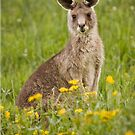 kangaroo iPhone cover by Lisa Kenny