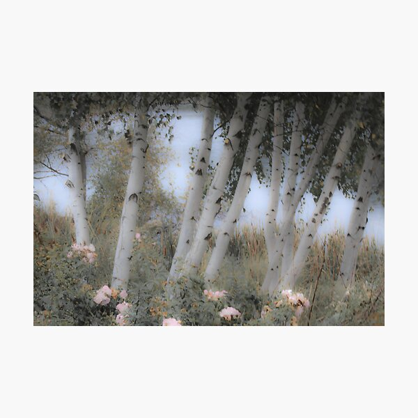 Rose and Birch Photographic Print