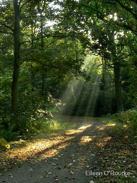 Shaft of Sunlight by Eileen O'Rourke