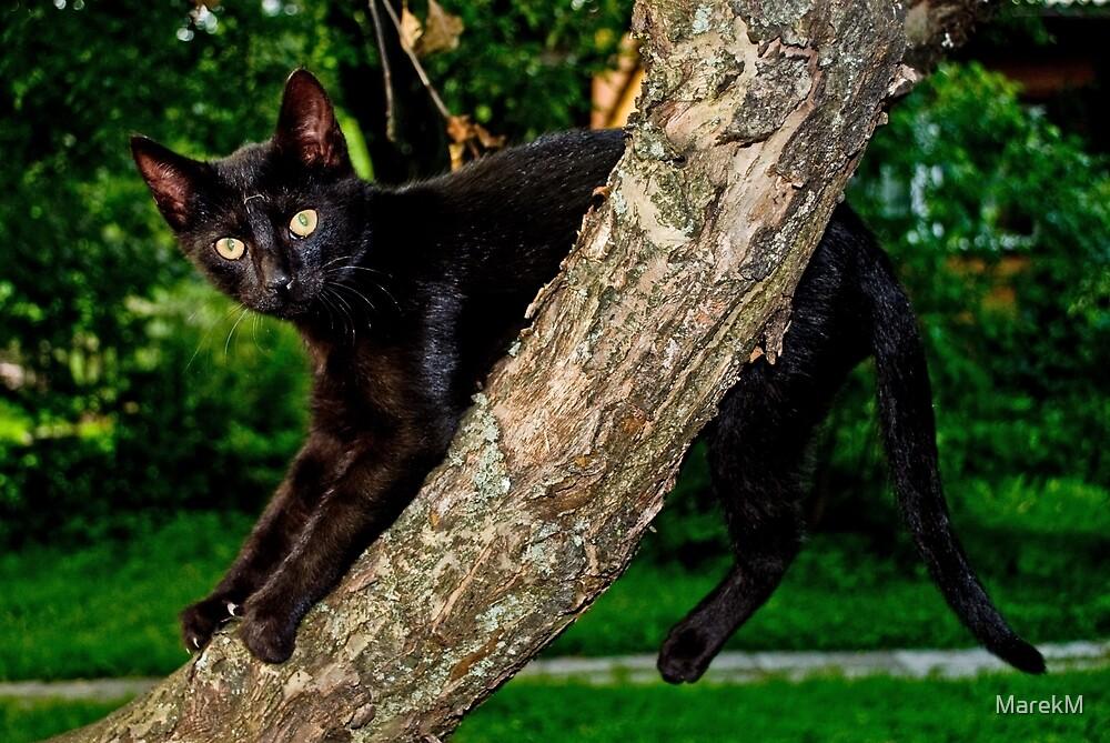 The cat 3 by MarekM