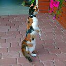 The cat 4 by MarekM