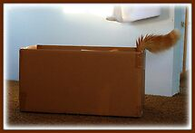 Can You Guess who's in this box?? by Angie O'Connor