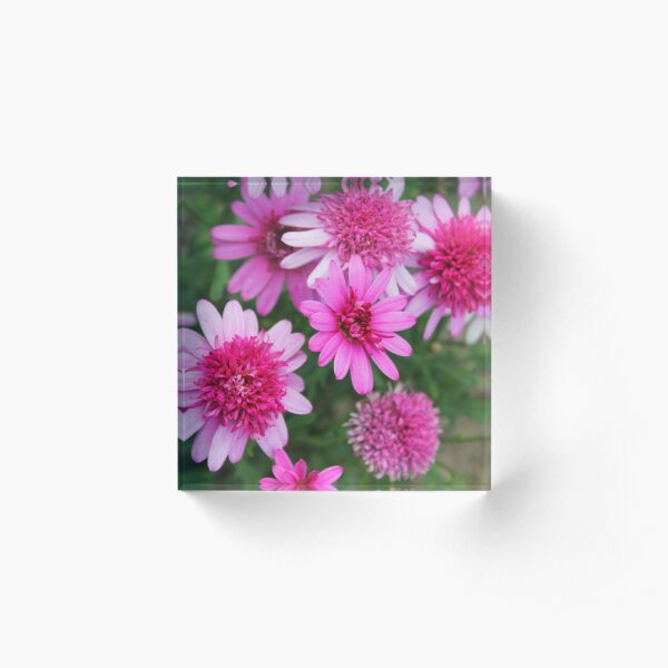 A profusion of pink Acrylic Block