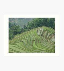 Rice terraces at Meng Ping Art Print