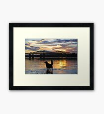 Golden {Retriever} Sunset Framed Print