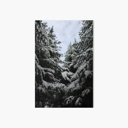 Northern woods, light and dark Art Board Print