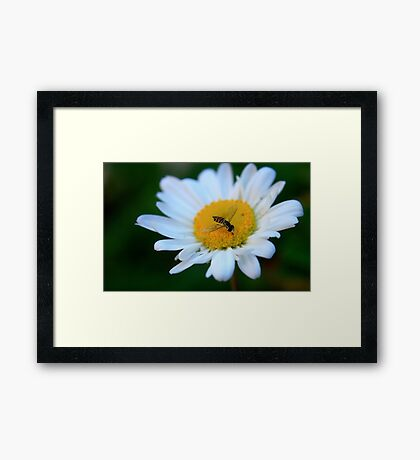 Tasty Daisy Framed Print