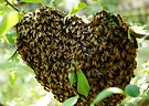 HEART SWARM by Betsy  Seeton