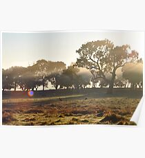 Kangaroos and Ponies in the Morning Mist Poster