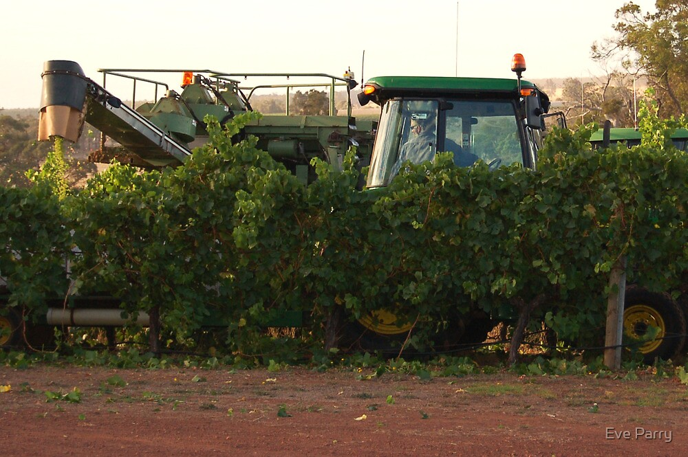 Grape Harvest by Eve Parry