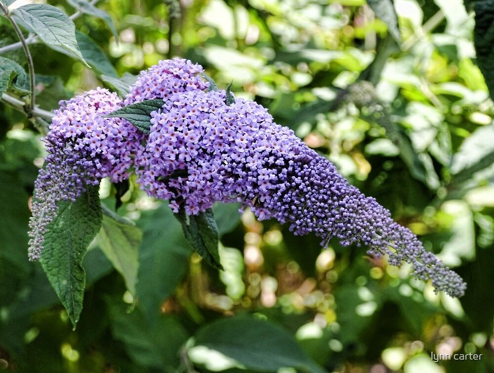 Butterfly Bush by lynn carter