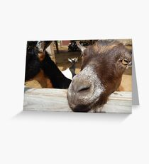 goat headshot Greeting Card