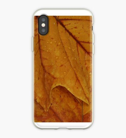 American Tulip Poplar for iPhone iPhone Case