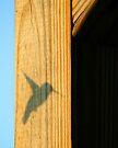 Ruby Throated Hummingbird Shadow by G. David Chafin