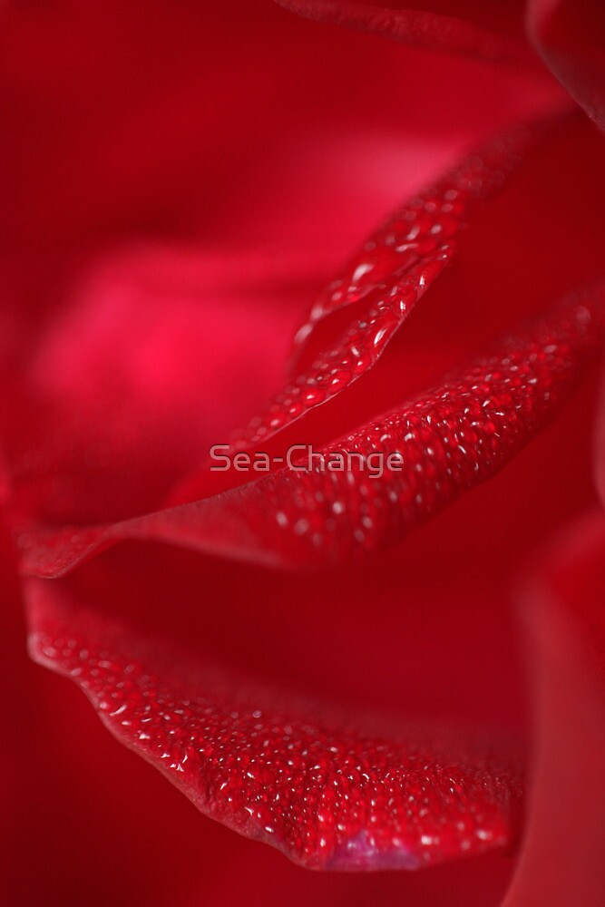Raindrops on Roses #9 by Sea-Change
