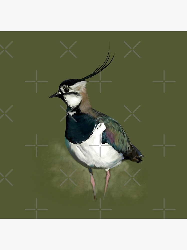 Northern Lapwing Study by ifourdezign