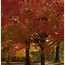 Fall Color's by Bill Coughlin