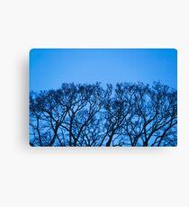 Tree Form / Growth Canvas Print