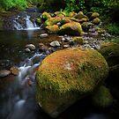 McCord Creek IV by Tula Top