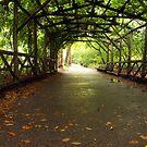 Central Park, Manhattan, New York by Bev Pascoe