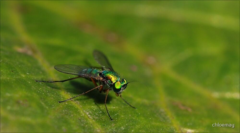 No flies on me by chloemay