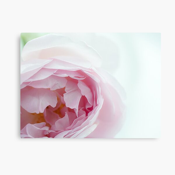 A Bouquet Of English Roses From My Rose Garden #10 Metal Print