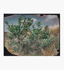 Crabapple Tree Photographic Print