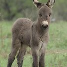 iphone donkey by TxGimGim