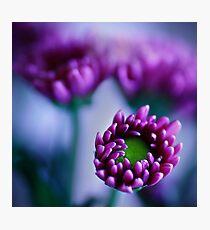 Colour Of Life XXXIV [Print & iPad Case] Photographic Print