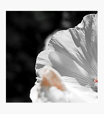White flower detail Photographic Print