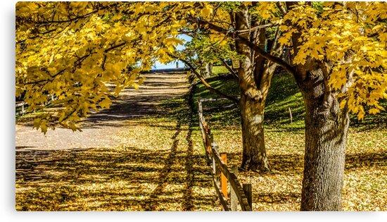 Redmond in fall set 101b by Richard Bozarth