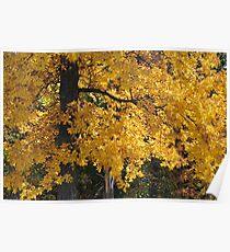 Golden Autumn Parker, IN Poster