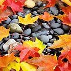 Fall Art prints Colorful Autumn Leaves Rocks by BasleeArtPrints