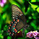 Butterfly Whispers Iphone Case by Brenda Burnett