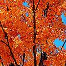 Autumn Orange by Robert Goulet