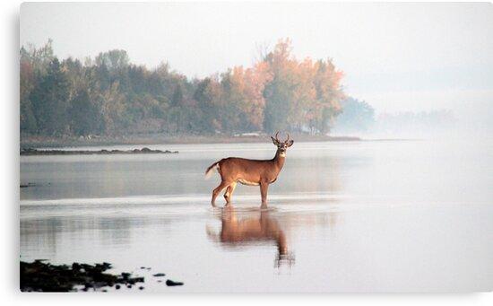 Buck - Ottawa River by Debbie Pinard