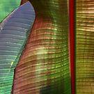 Leaves 2 by Michael  Herrfurth