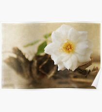 Petite Tree Rose on Driftwood Poster