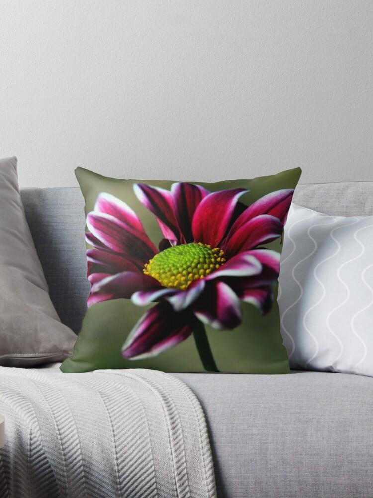 Daisy Flower by Nickie