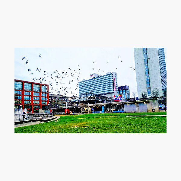 Pigeons Flying Over Piccadilly Gardens Photographic Print