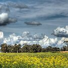 Canola & Clouds by Eve Parry